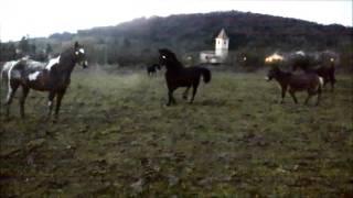 15 janvier 2016 chevaux du Domaine d'Avallon