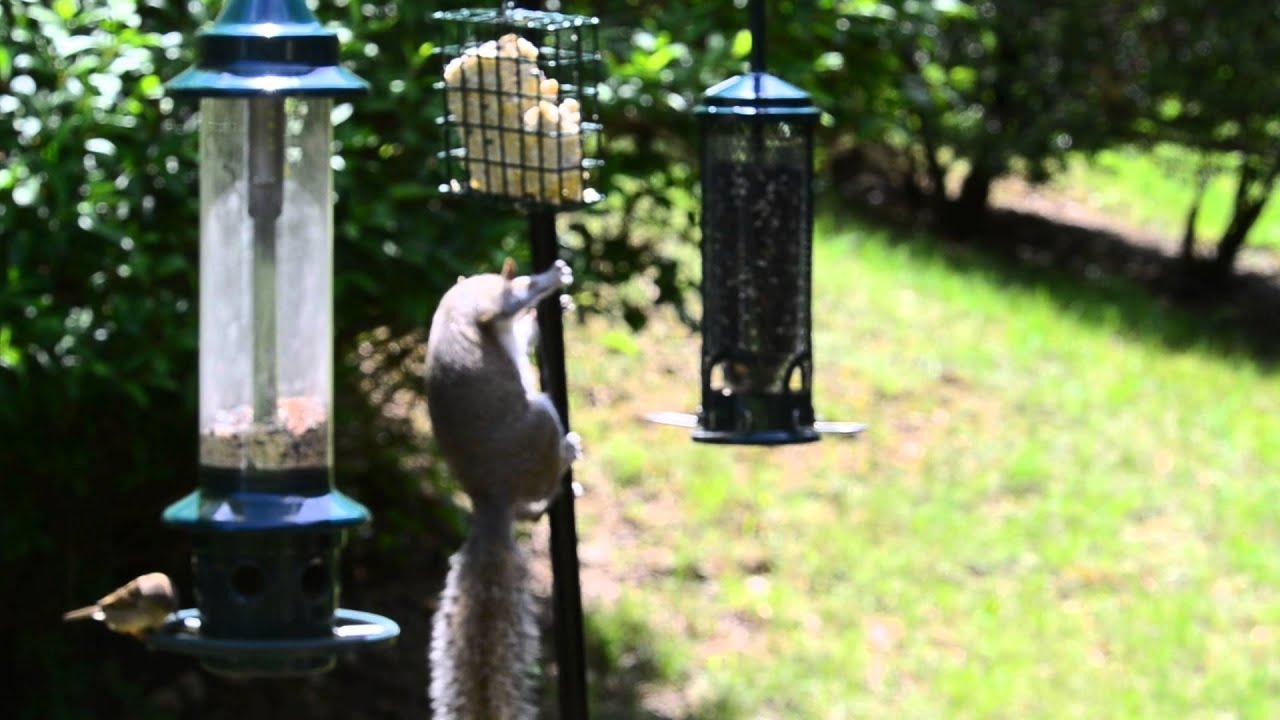 Squirrel vs Brome Squirrel Buster Plus Bird Feeder