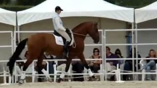 Выездка_лошадей