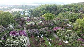 Аэросъемка. Свадьба. Ботанический сад им. Гришко. Аerial video. Kyiv. [Copterfield]