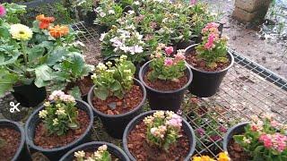 Plant nursery in kochi // Beautiful flowering plants with price (മലയാളം )//A nursery visit