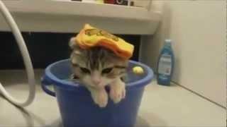 Co ja pacze? Najśmieszniejsze koty na świecie ;) 4/4 The funniest cats in the world