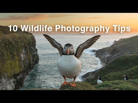 10 Wildlife Photography Tips You Can't Miss | Nature Photography Tips