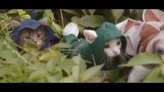 Коты  Assassin
