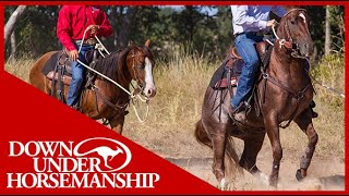 Clinton Anderson: Correcting Horses That Bite and Kick Other Horses - Downunder Horsemanship