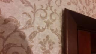видео Межкомнатные двери из массива ольхи