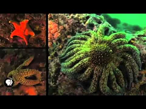 The Hunt for the Elusive Echinoderms