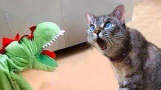 NEW ПРИКОЛЫ 2019 - Смешные с кошками - Глупые кошки заставляют вас смеяться без остановки