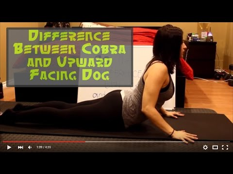 cobra versus upward facing dog  youtube