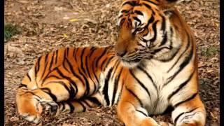 Секреты в мире животных.Пантеры кто они на самом деле