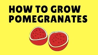 How to Grow Pomegranates from Seed Easily