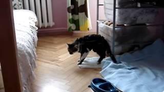 Кошка не после наркоза