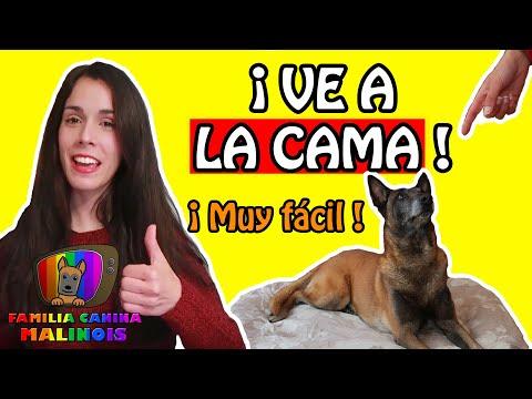 CÓMO ENSEÑAR a un PERRO a IR a la CAMA y RELAJARSE | Adiestramiento Canino