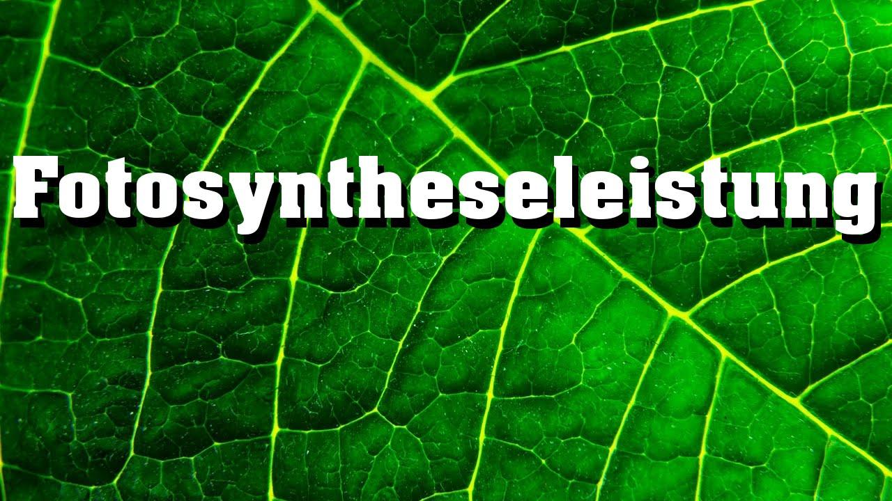 Fotosynthese: Einfluss von Temperatur, Lichintensität, Lichtqualität ...