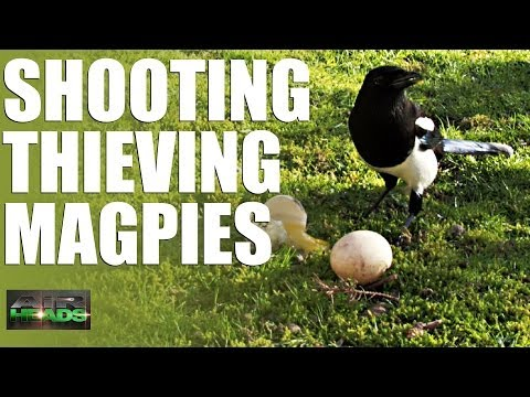 AirHeads - Shooting Thieving Magpies (episode 6)