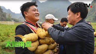 《大地讲堂》 20200517 把论文写在贫困的大地上|CCTV农业
