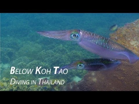 Below Koh Tao 2012 - HD Underwater Video