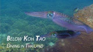 Below Koh Tao 2012 - HD Underwater Video