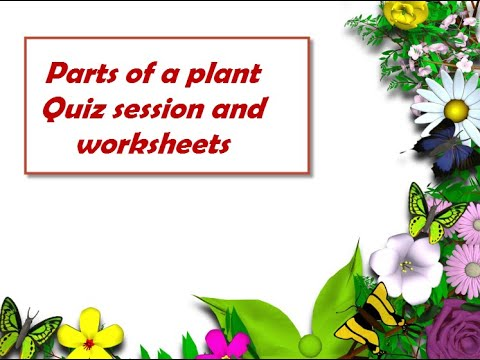 Class 3 Science Parts Of A Plant Solved Questions Worksheets Link In Description Youtube