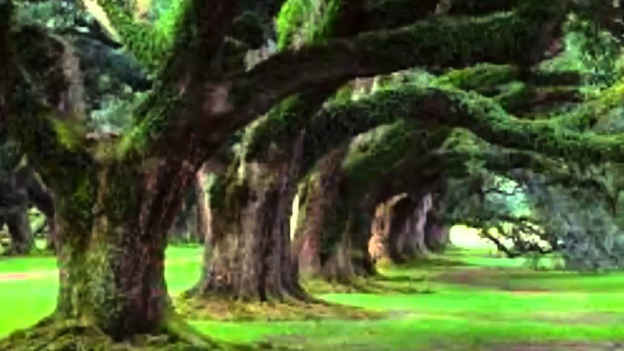 Amazing Nature Scenes Pictures [720p] [HD] - YouTube