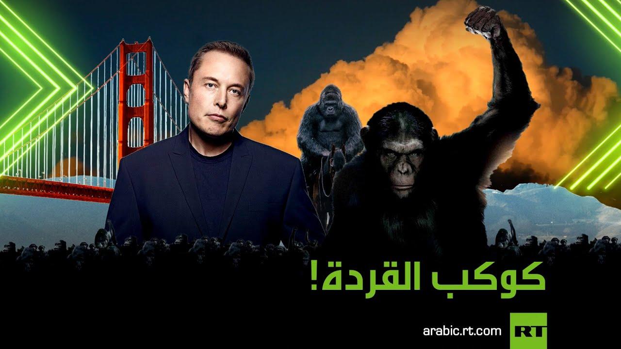 جيش القردة  - نشر قبل 41 دقيقة