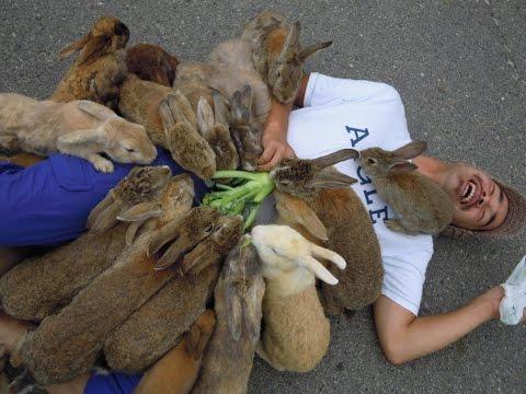 Trollicitor - Hack Rabbit   Solicitor Prank Phone Calls