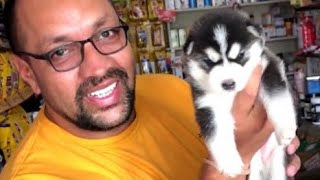 Pet-Care | Can you tell a Puppy's age by its Teeth? How To Know The Correct Age Of Dog | Bhola Shola