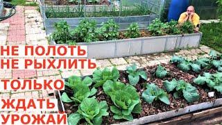 Как покончить с работой в огороде уже в июне и ждать урожай?