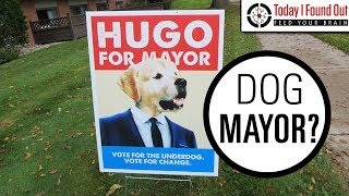 What Happens When a Town Votes For a Dog or Cat to Be Mayor