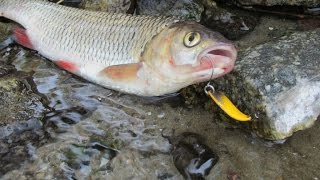 ШОК! Первый ультралайт на голавля и вокруг одни браконьеры! Прогулка по рыболовным местам Запорожья