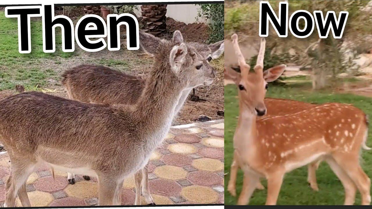 Updating deers free online arabic dating sites