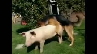 Собака трахает свинью под клип Егора Крида