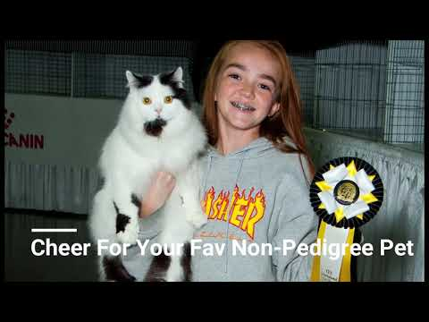 2018 CFA International Cat Show Presented by Royal Canin
