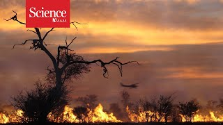 Fires can kindle biodiversity, sparking new approaches to conservation