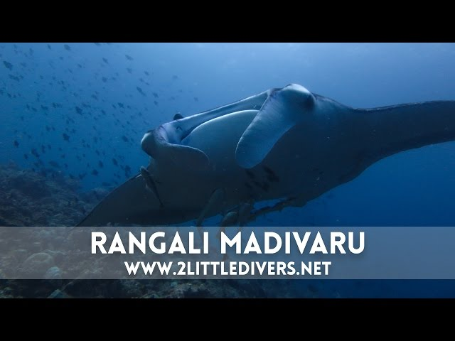 2 Little Divers | Rangali Madibaru - Maldivas Semana Santa 2015
