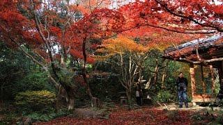 2016嵯峨野・厭離庵の散紅葉