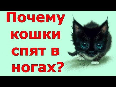 Зачем кошки ложатся спать у хозяина в ногах?