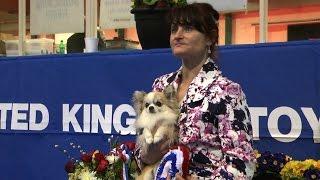 Around The Dog World - Uk Toy & British Breeds (episode 42)