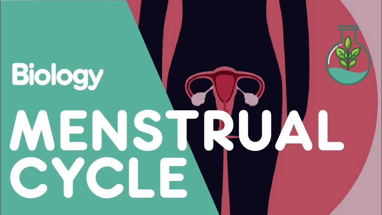 How to count the cycle of menstruation - this is not known to all