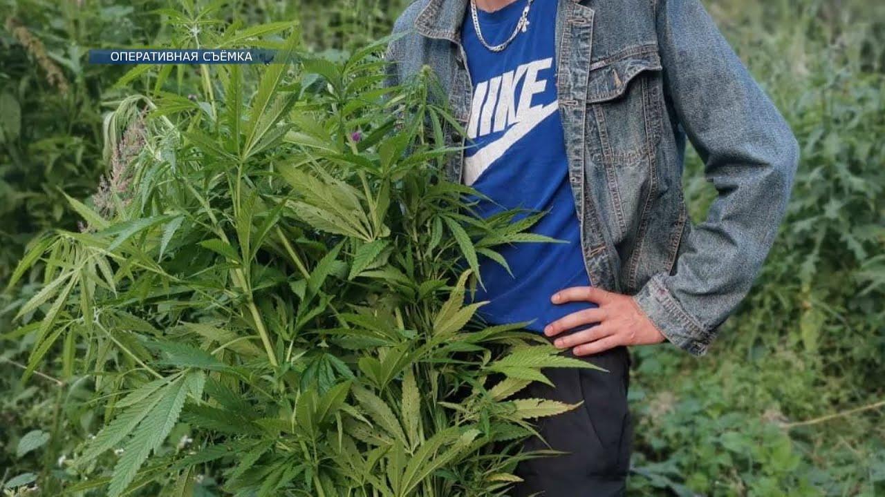 Конопля ютуб остановил гаишник марихуана