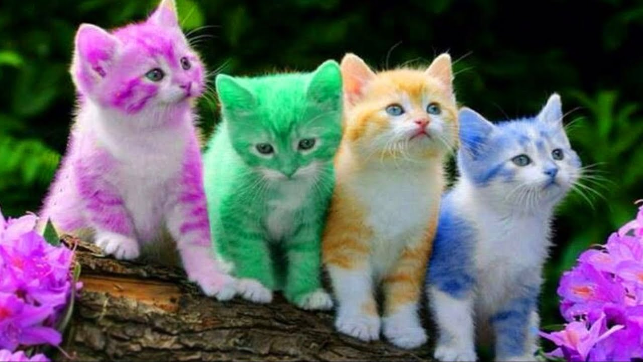 Cute Kitten Cat Colorful Learning Color Video For Kids ...