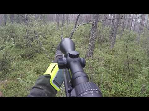 Hirvenmetsästys 2020 [Moose hunting]