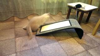 Наш котенок 2 месяца