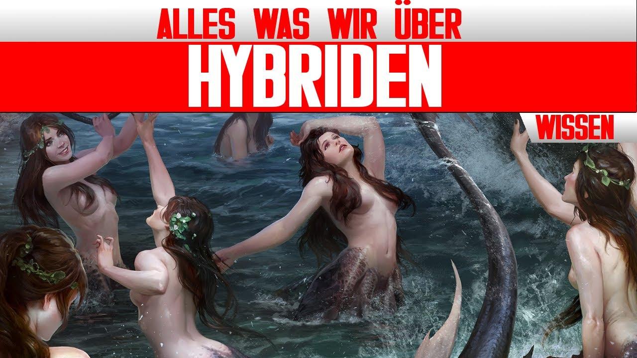 """Alle """"Hybriden"""" aus The Witcher 3: Wild Hunt und Mehr - Witcher Lore - LoreCore"""