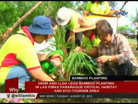 DENR, LLDA lead bamboo planting in Las Piñas-Parañaque Critical Habitat & Eco-tourism Area
