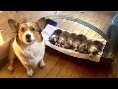 รวมภาพ ลูกหมาน่ารัก