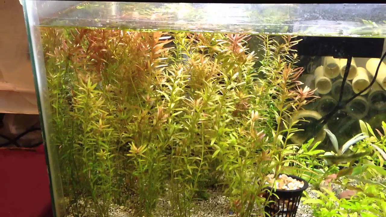 My Planted Tanks - YouTube