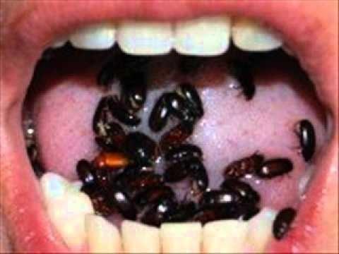 gorgojo chino curativo y sin efectos colaterales