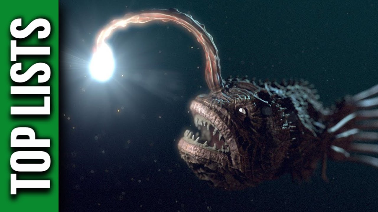 10 scariest deep sea creatures youtube publicscrutiny Images