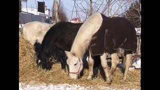 Приют для лошадей в с  Тимофеевка ищет друзей